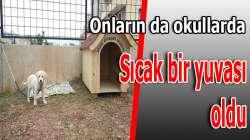 Okullara Kedi Ve Köpek Kulübesi Dağıtıldı